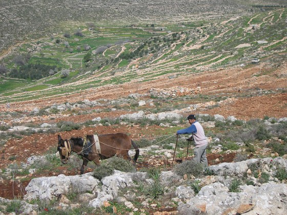 west bank sustainable farm